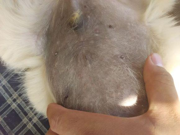 各种皮肤病�y�i�f_宠物卫士★各种宠物皮肤病 病理图. 请大家对照
