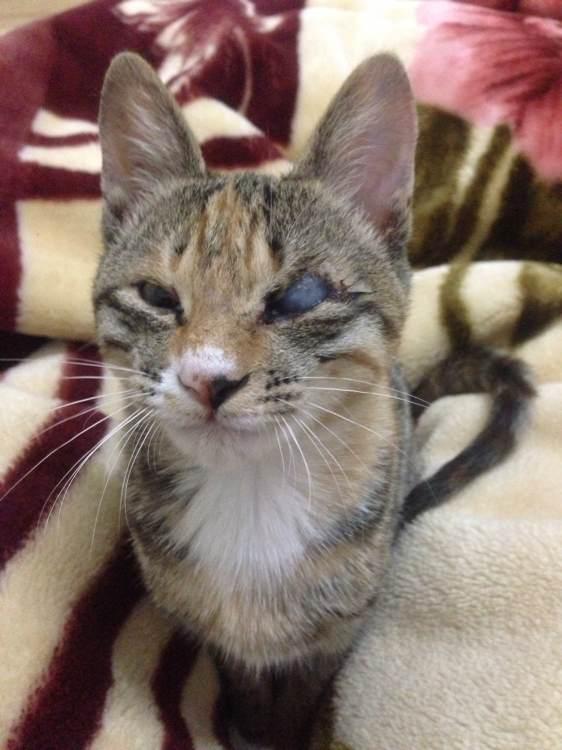 眼球萎缩图片_闹闹抱来时左眼球萎缩眼眶封住,现在眼球长大了但是估计对视力有影响