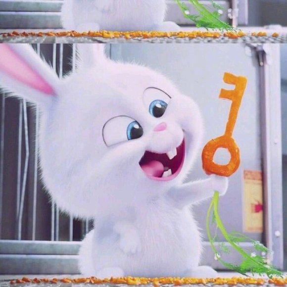 高清谁有爱宠大机密兔子高清头像_头像吧_百度贴吧