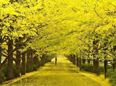 关于描写秋天的优美句子图片