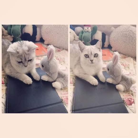 【图片】银渐层,六个月,母猫【贵阳吧】_最新电视剧,.