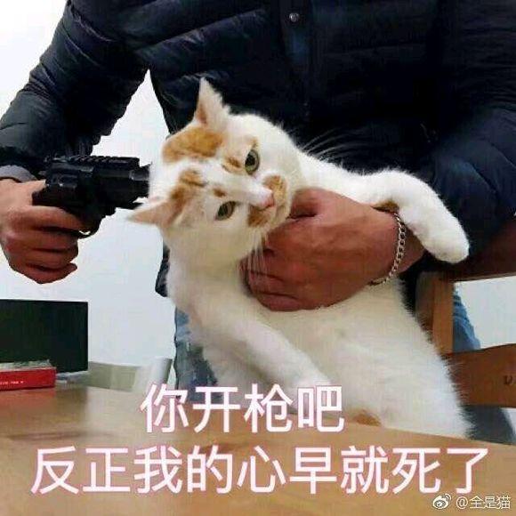 狗怀孕b图_壁纸 动物 狗 狗狗 580_580