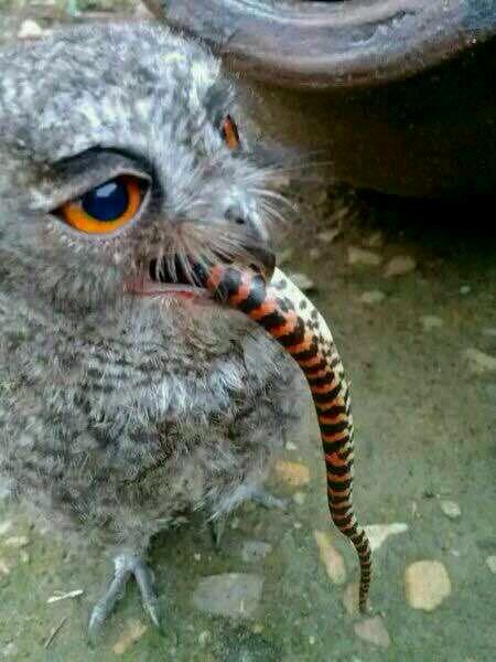 难道猫不怕蛇吗?