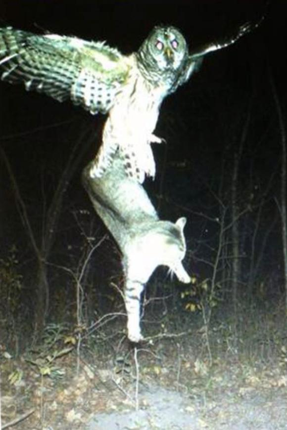 恶搞】天蛾人,话说我第一眼确实看错了 ... Scary Deer Cam Pictures