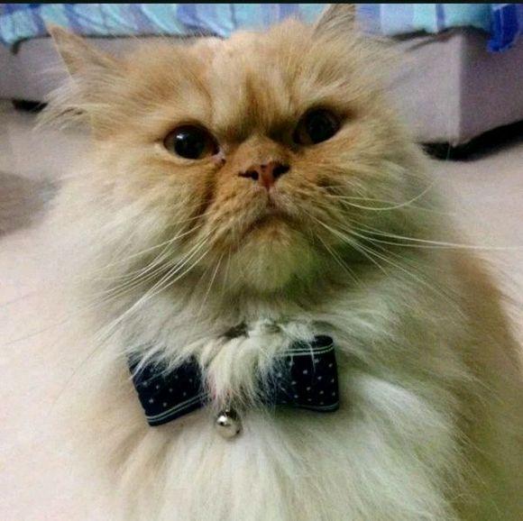 微信表情秋裤猫分享展示图片