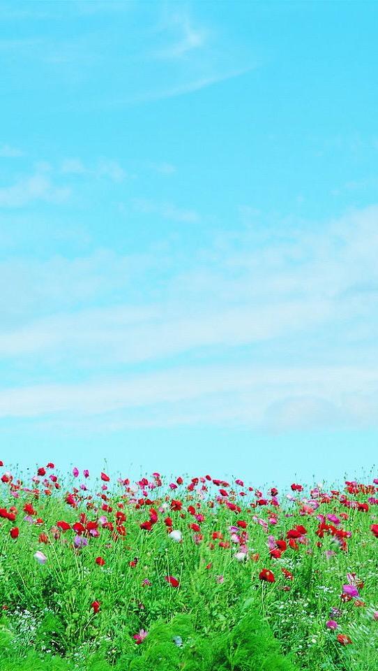 春暖花开手机壁纸