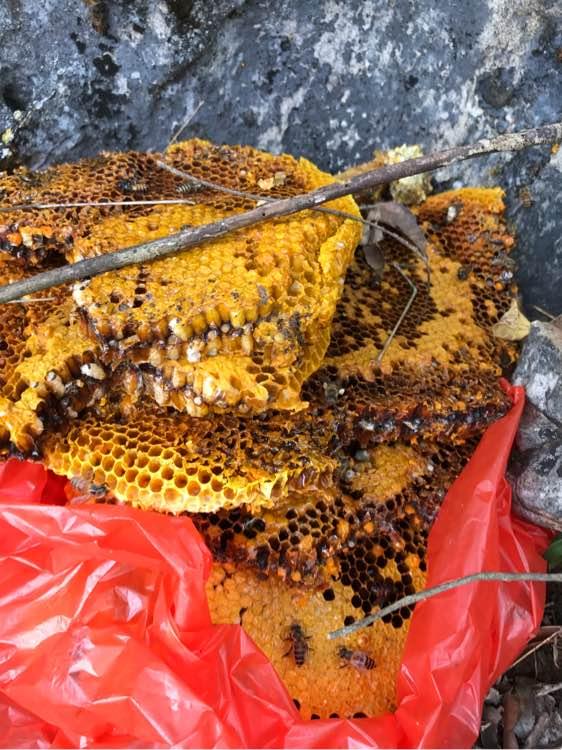 送蜜渣,子脾_鹦鹉吧_百度贴吧刚出生的蜜蜂皮皮怎么喂图片