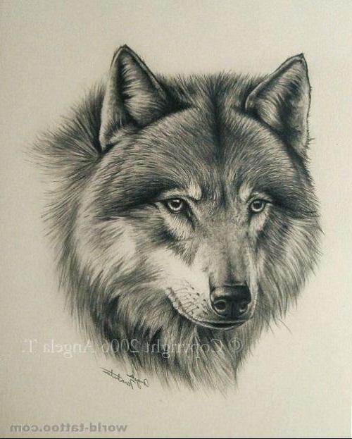 狼头纹身手稿 霸气分享展示图片