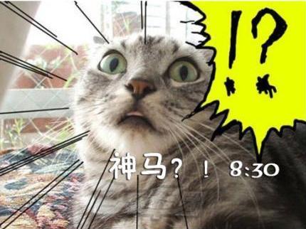 【喵星人又搞怪了】___猫咪搞笑屌丝表情 演绎上班族图片