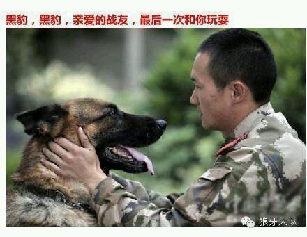 军犬哭囹�a��(�-c_军人与军犬的分别(好多人都看哭了)