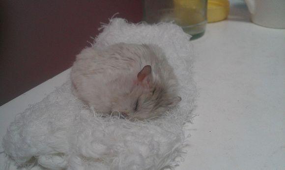仓鼠死了的样子下载,女奥特曼死了的图片,人死了什么样子
