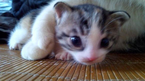 小萌猫表情包带字分享展示图片