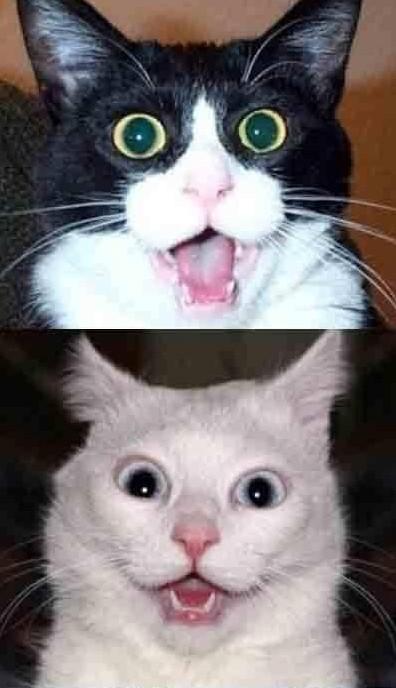 萌猫嫌弃的表情图片展示图片