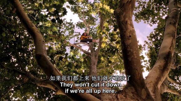 当有人要砍掉她最心爱的梧桐树时,她诚心向布莱斯请求,求他帮她留住这图片