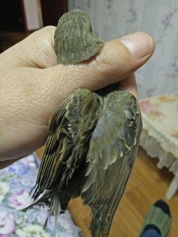 【图片】回复:想鉴定麻料是公母的请开此帖【麻料鸟吧