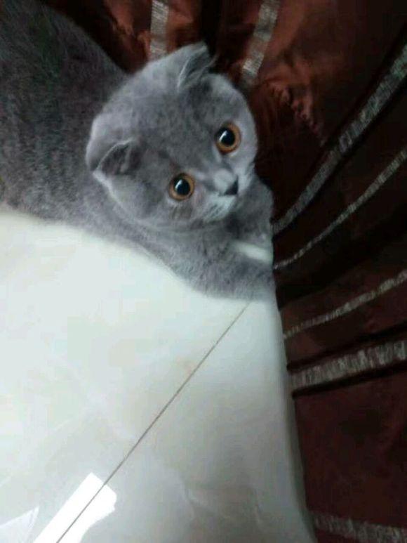 壁纸 动物 猫 猫咪 小猫 桌面 580_773 竖版 竖屏 手机图片