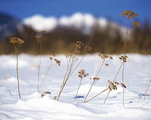 《埋葬冬天》的歌词