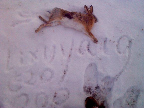 兔子的脚印.图片