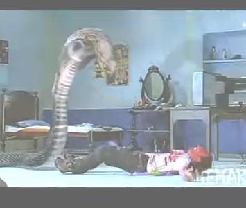 欲蛇美女蛇国�_【图解】欲蛇(又名美女蛇)-第一次发帖 大家支持支持哦~么嘛