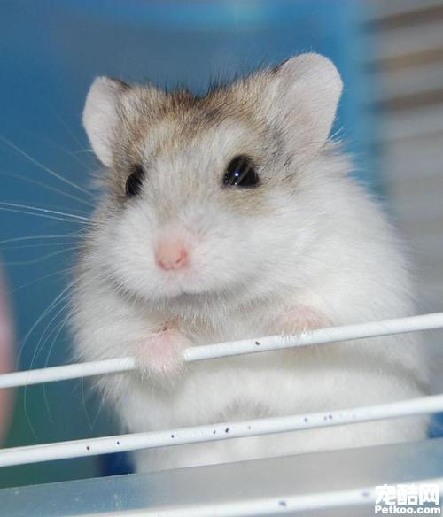 公仓鼠突然遇到很凶,已经咬人很多次了.,蟒蛇了?家里变得这是怎么办图片