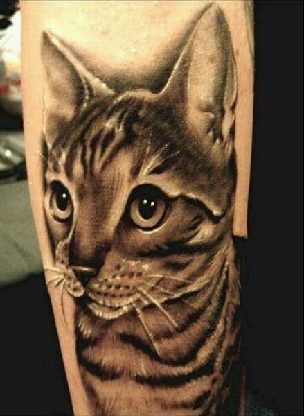 手部猫纹身图案大全展示图片