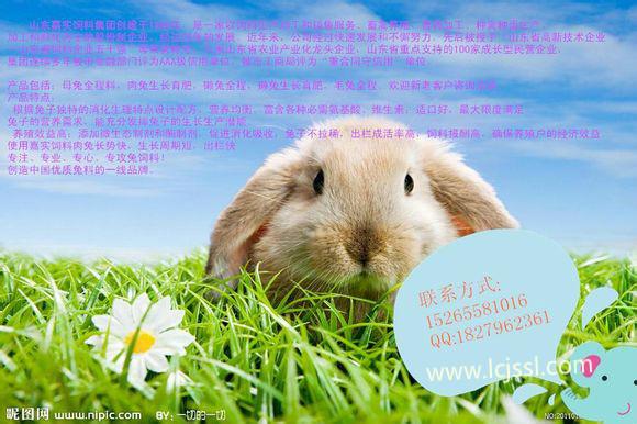 嘉实优质_嘉实优质兔饲料