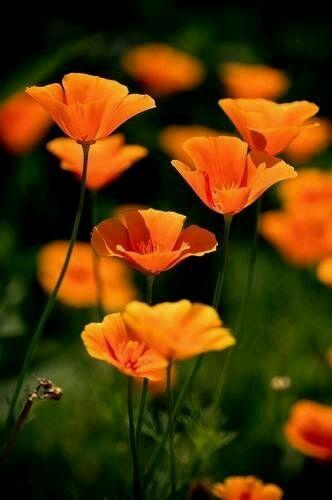 花图片-世界上最漂亮的花图片-世界上最美的花图片-世界上最美的花