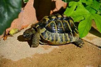 乌龟腐皮病怎么治疗