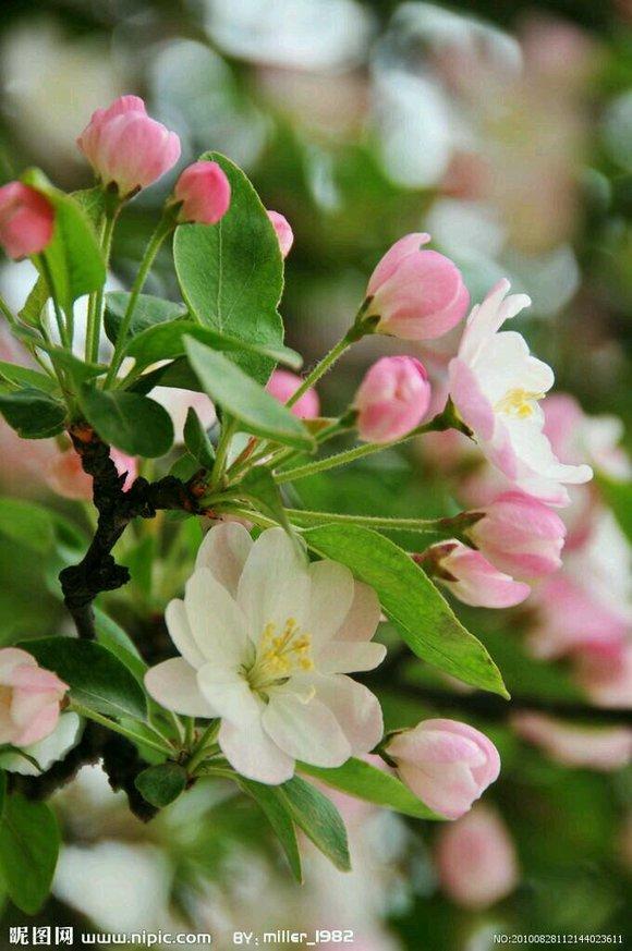 春天的脚步总是来的太慢,我急切想闻到青草的芬芳,想看到迎春的
