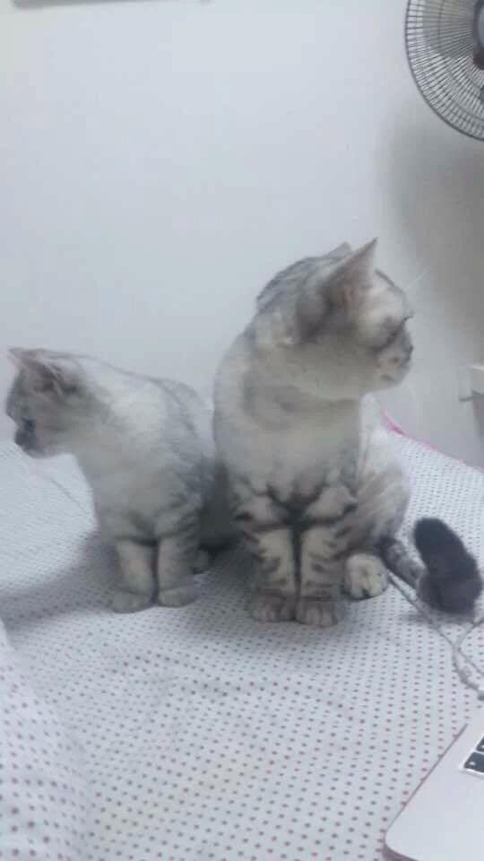 【图片】爱猫【同江一中吧】_百度贴吧
