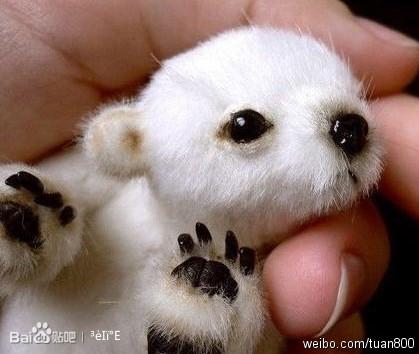 刚出生不久的小北极熊仓鼠为什么闭眼睛图片