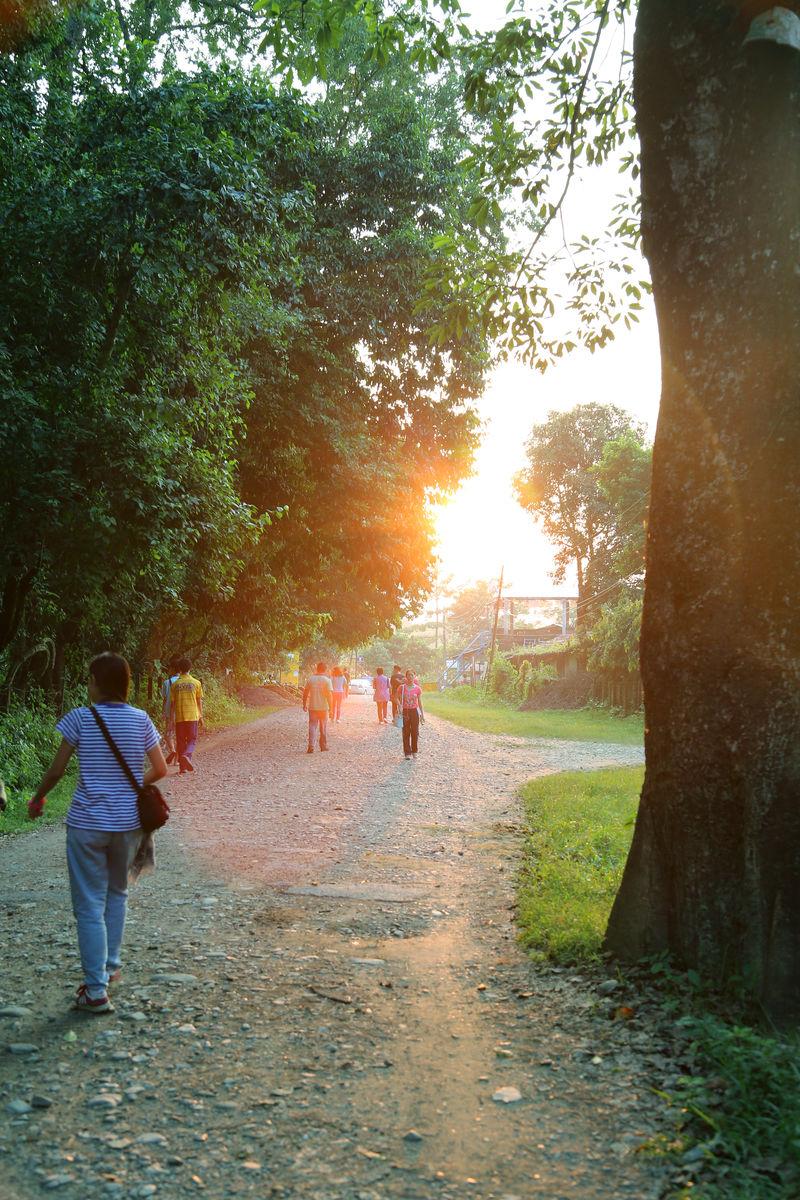 拉伯馆_尼泊尔,奇特旺,拉伯的河,路途,逆光,傍晚,游人,大树