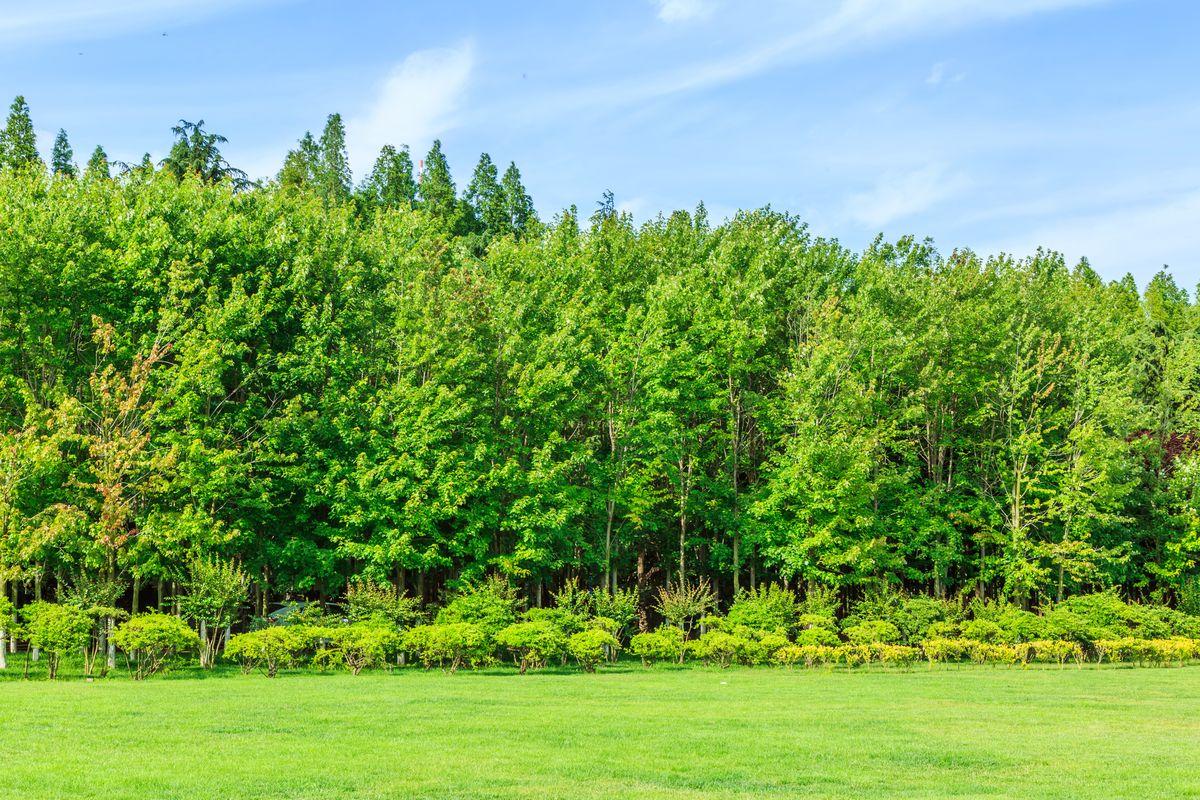 绿树林图片
