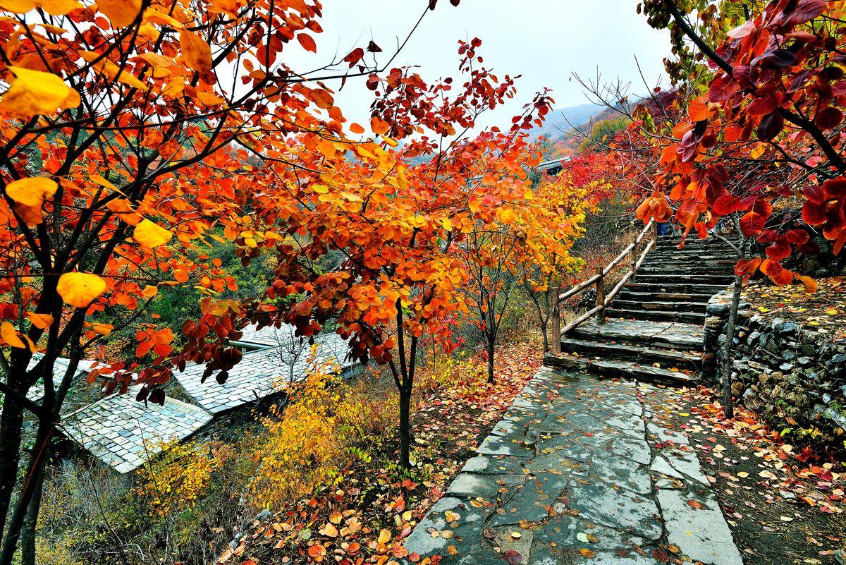 坡峰岭红叶景区上山步道图片
