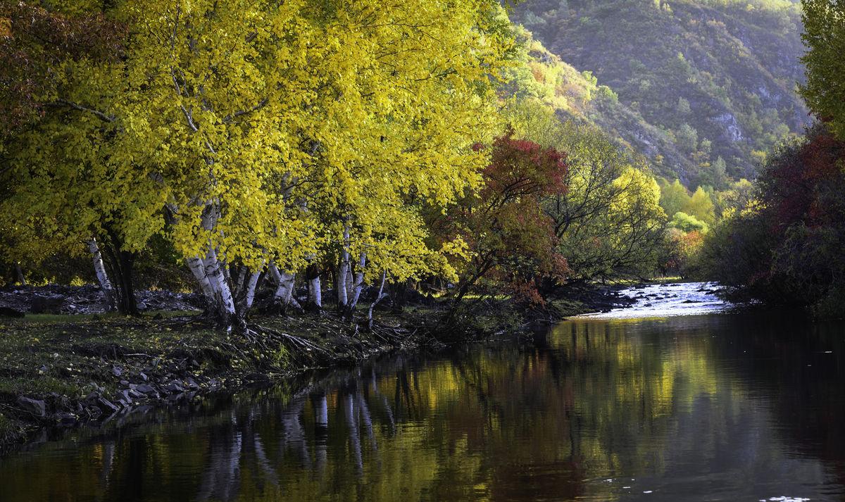 秋色,枫树,秋天,秋景,园林,五角枫,森林,自然,内蒙古,风景区,河流图片