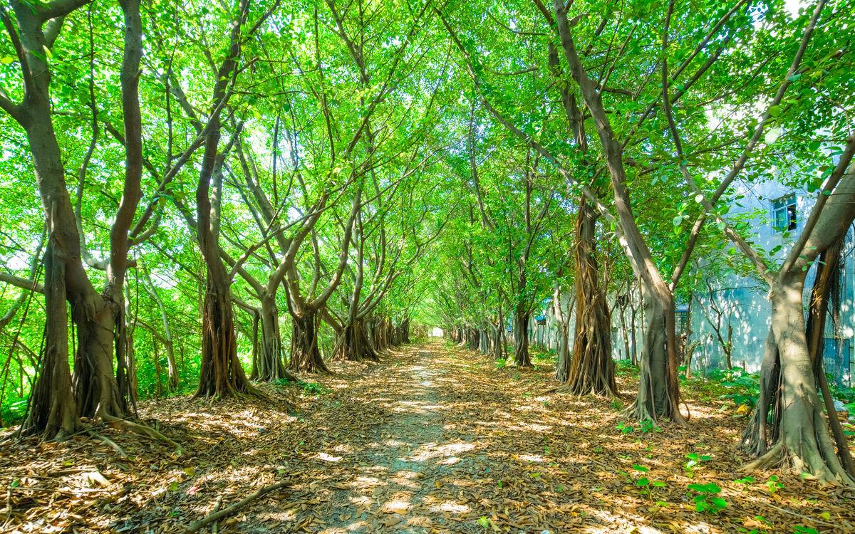 森林,森林小路,树林,森林背景,树林背景,树林小路,绿树背景,大森林图片