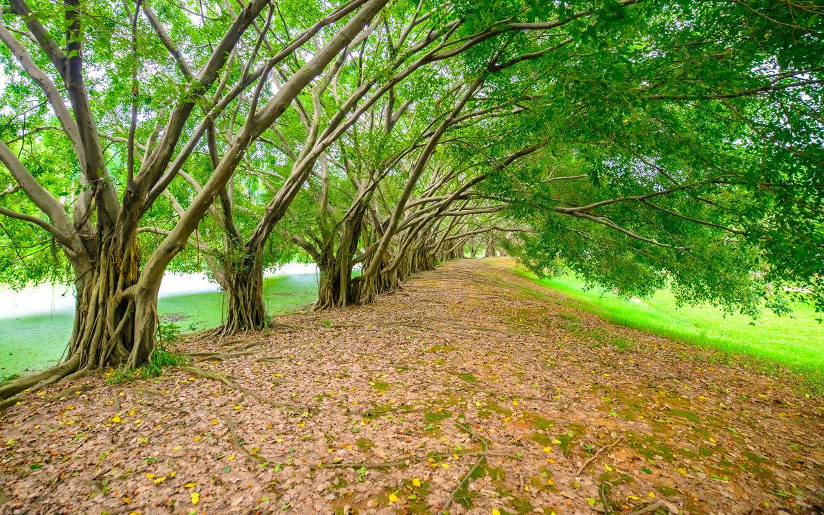 森林小路,森林公园,森林,树林,绿树林,大森林,树林背景,森林背景图片