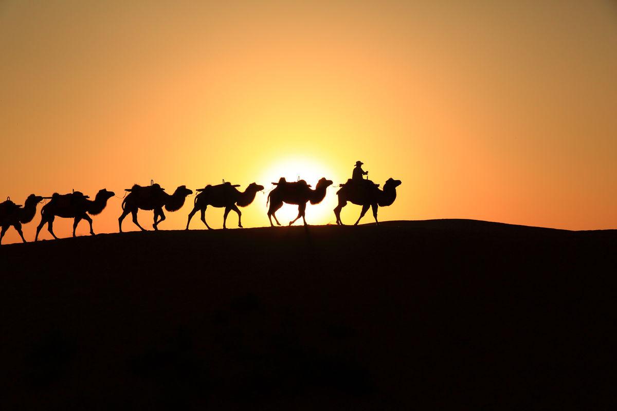 沙漠之舟,骆驼,骆驼队,驼铃,朝阳,彩虹