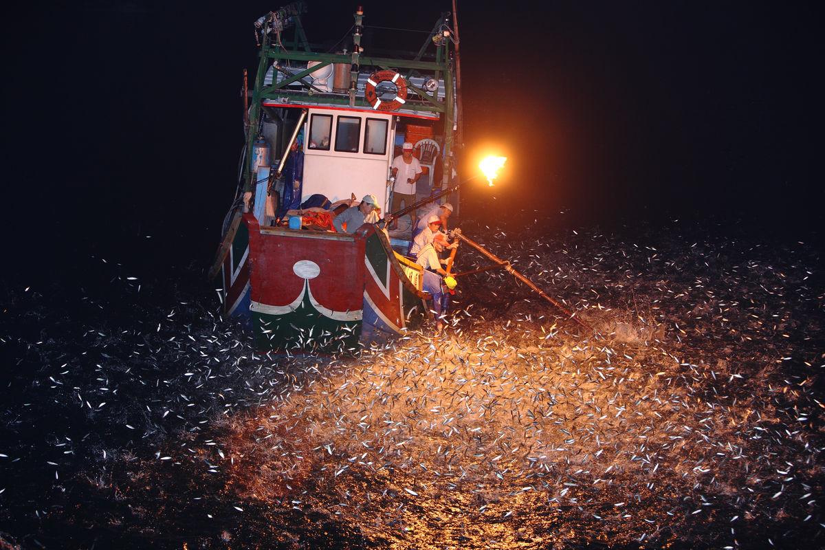 北海岸传统磺火捕鱼图片