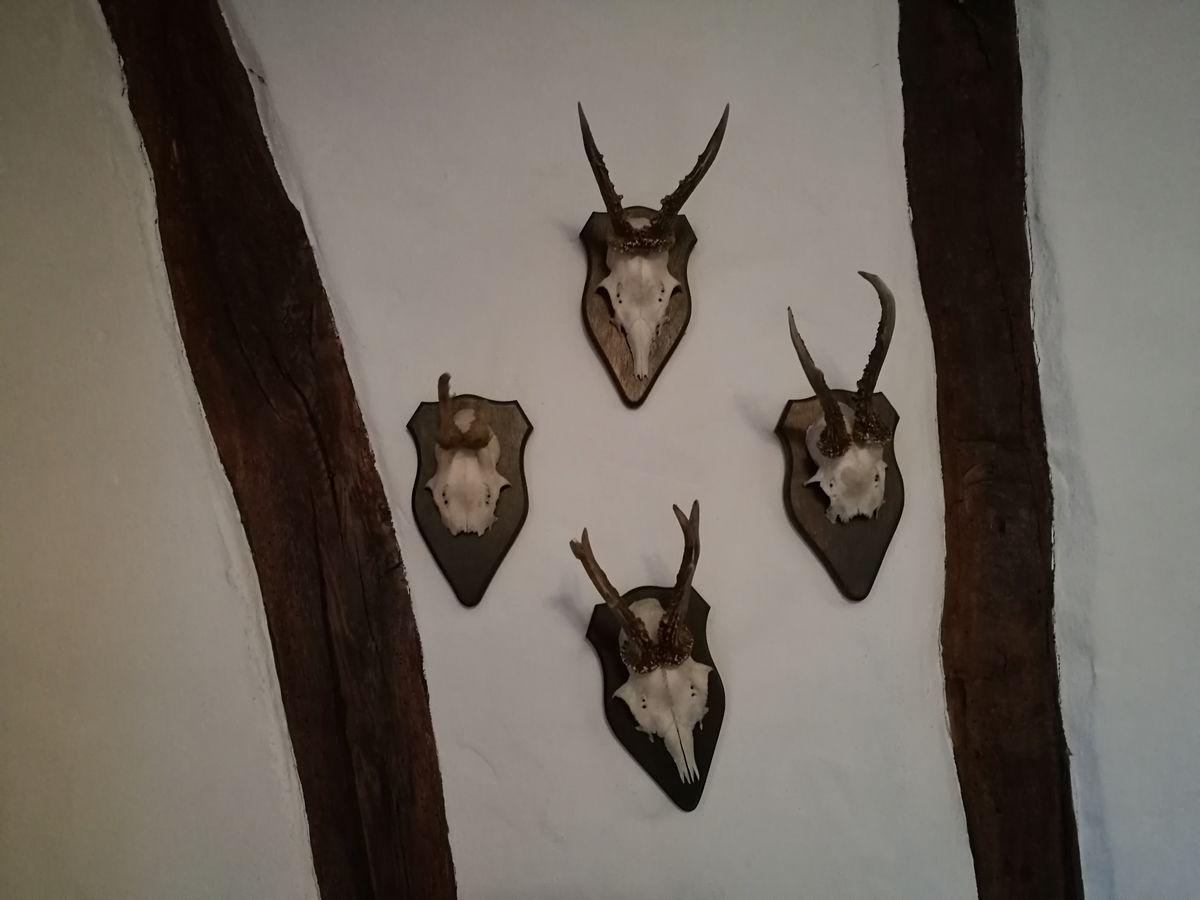 欧洲,旅游,古堡,别墅,打猎,鹿头,标本,纪念,图腾,挂件,富有,有闲阶级图片