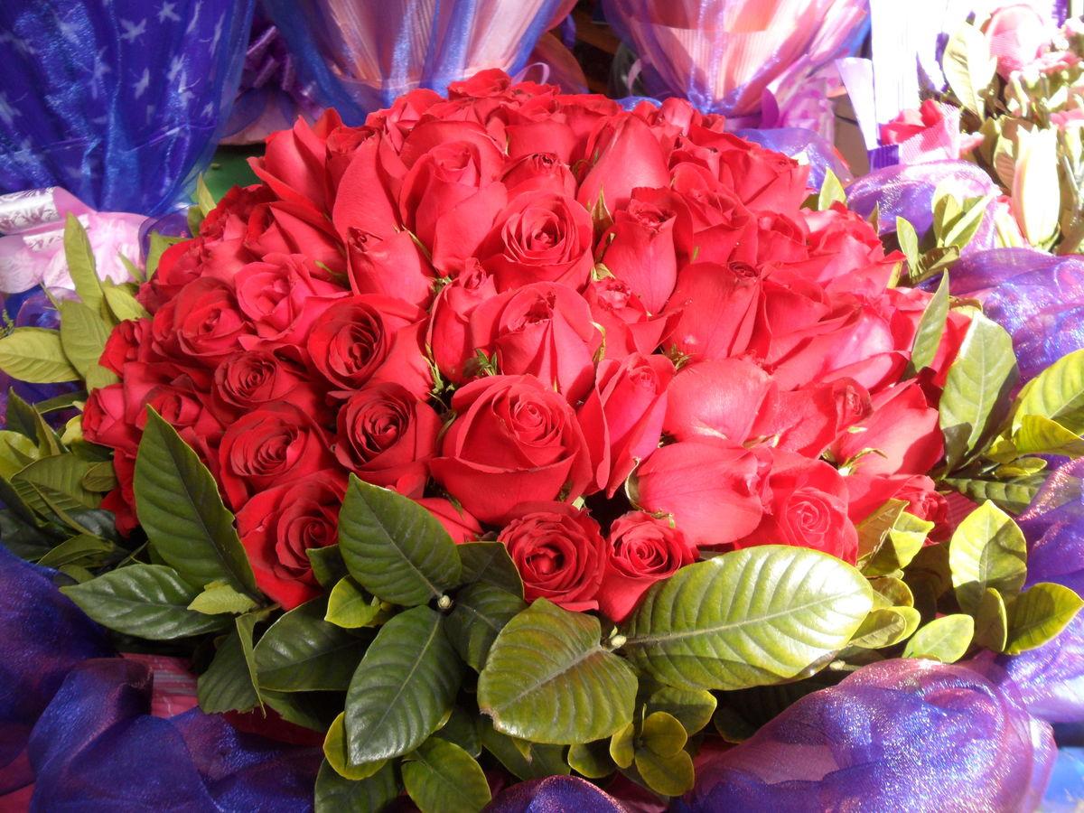 刺玫花,红色,红玫瑰,玫瑰,红花,花草,花朵,鲜花,植物,花卉,七夕节,情图片