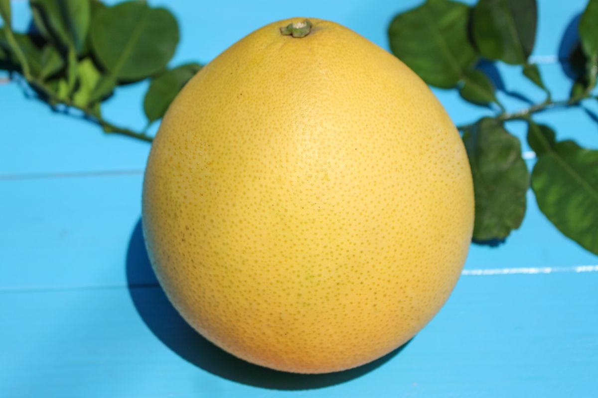 红肉柚子摄影图片图片