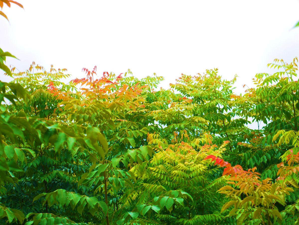 树林,丛林,树,树木,枝叶,红叶,叶子