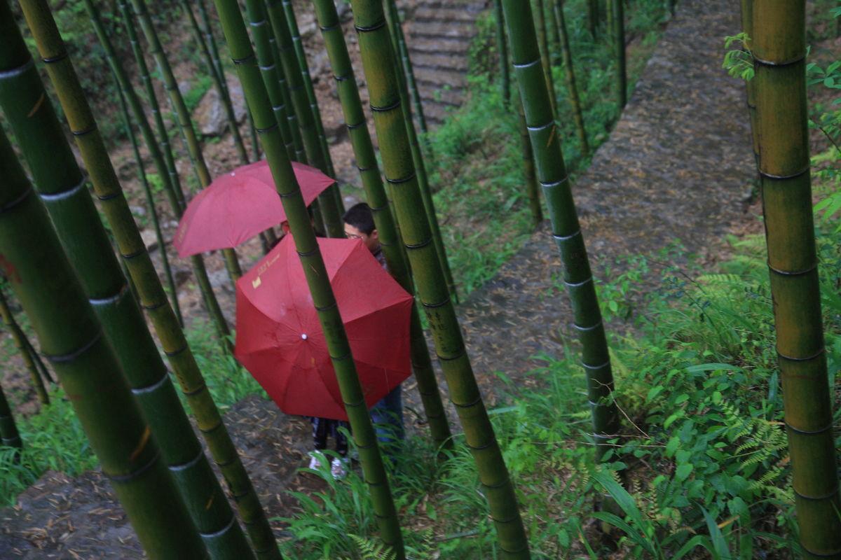 江苏,宜兴,户外,竹海风景区,竹子,竹海,毛竹,竹林,阴天,下雨,旅游图片