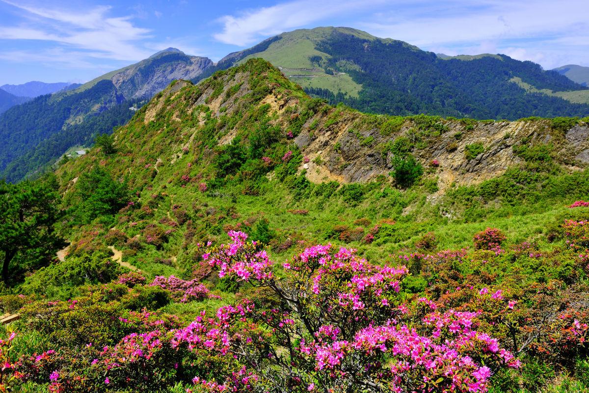 室外,植物,植物学,特写,植物群,自然,南投,太鲁阁国家公园,合欢山,红图片