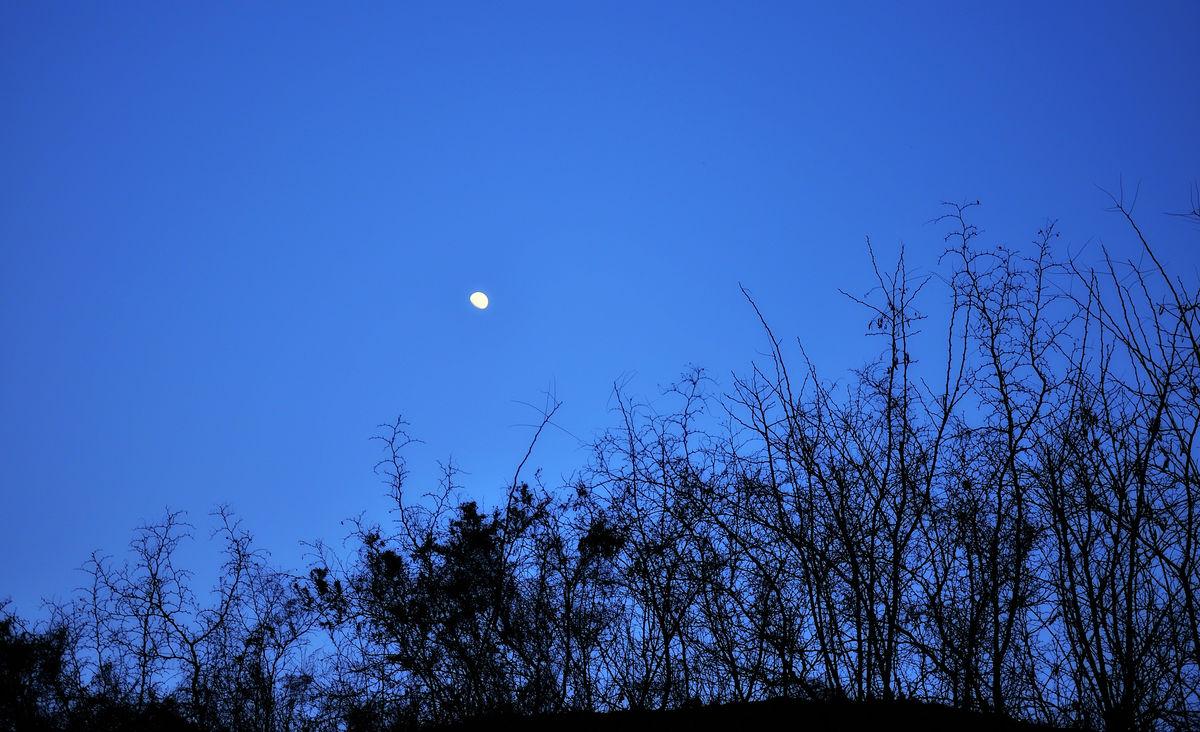 蓝色月光侦探礹.+y��_枣林月光,枣林,月光,蓝色月光,枣树,枣枝,圆月