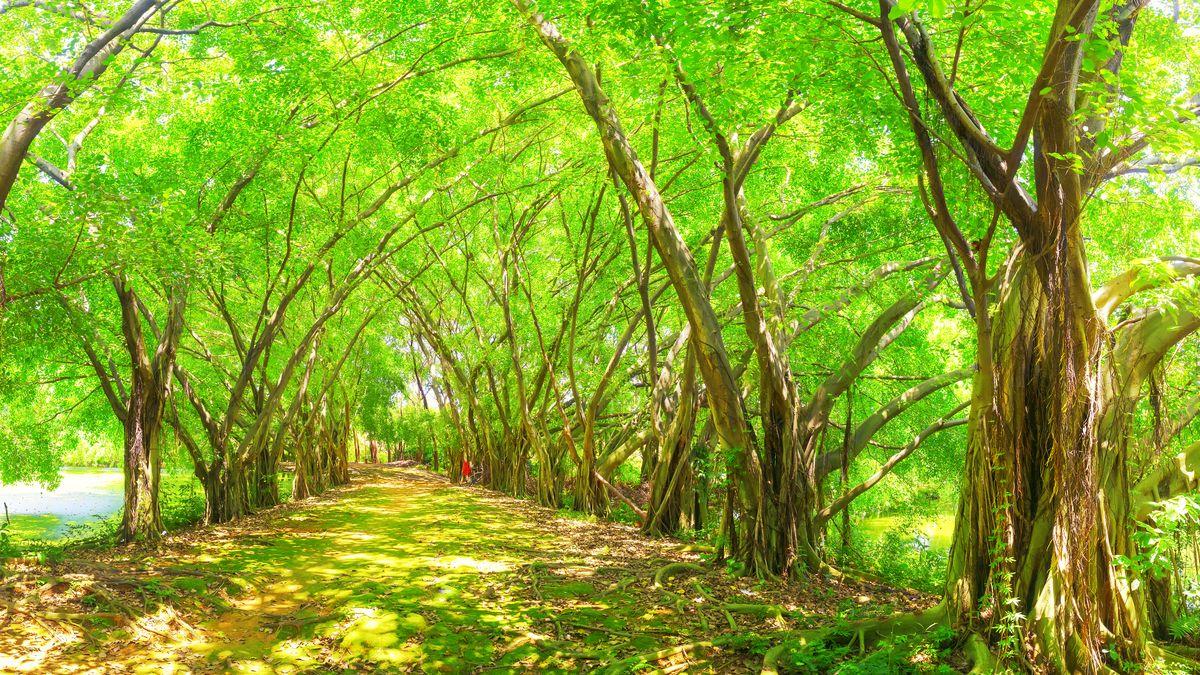 森林光影,阳光森林,阳光树林,唯美森林,梦幻森林,森林背景,大森林,绿图片