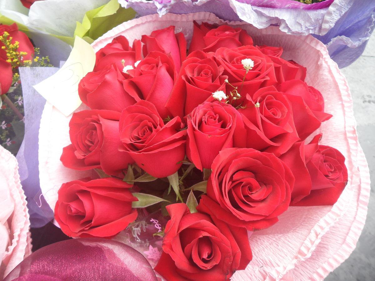 花苞,含苞,红玫瑰,玫瑰,花束,花草,花朵,鲜花,植物,花卉,七夕节,7夕图片