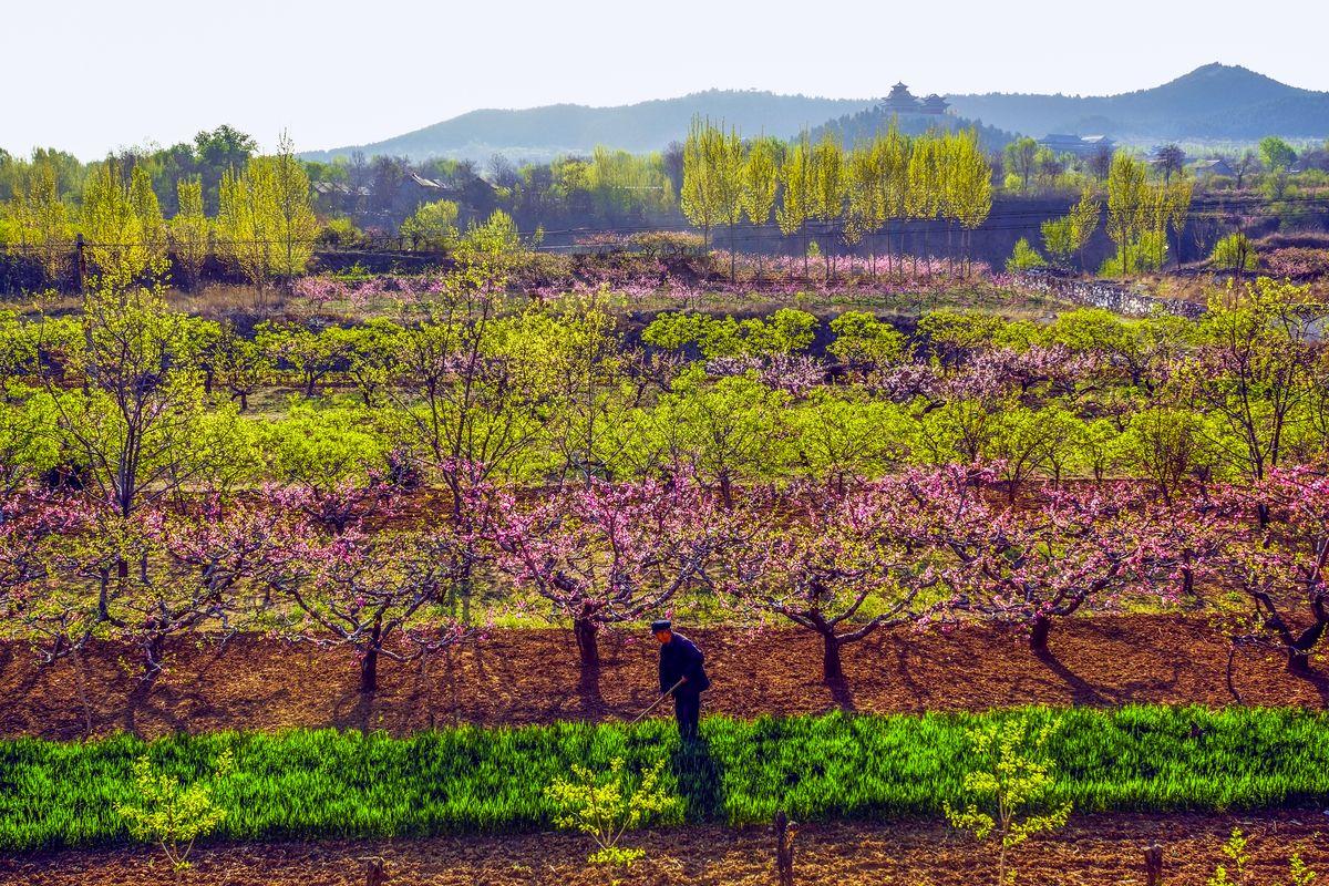 春色乡村小�9�-�..�o(9�&�l#_田野,农作物,田园风光,春色满园,乡村美景,田园春色,青州风光,户外