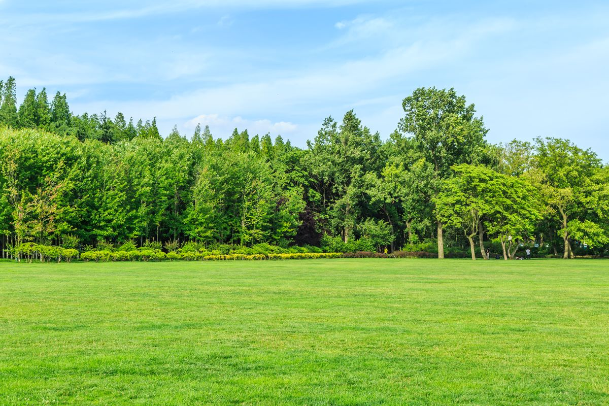 阳光森林,大森林,树林,树林背景,风景画,森林背景,绿树背景,森林光影图片
